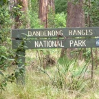 Day 7: Dandenong Ranges and Yarra Valley